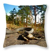 The Lunch Of Grass Snake Throw Pillow