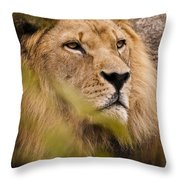 The Magnificent Cat Throw Pillow