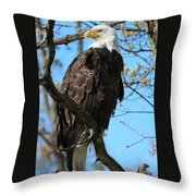 The Majestic One  Throw Pillow by Sheila Werth