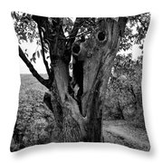 The Maltreated One Throw Pillow