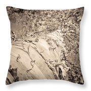 The Mighty Birch Tree  Throw Pillow
