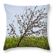 The More The Merrier- Tree Swallows  Throw Pillow