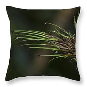 The Most Fabulous Spa..  Throw Pillow