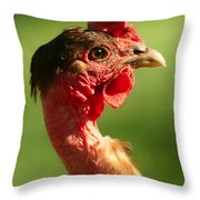 The Noble Transylvanian Naked Neck Chicken In Profile Throw Pillow