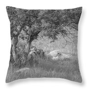The Old Homestead 2016 Throw Pillow