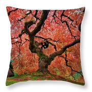 The Old Japanese Maple Tree In Autumn Throw Pillow