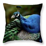 The Peacock - 365-320 Throw Pillow