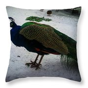The Peacock In The Royal Garden In Winter Throw Pillow