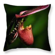 The Pitcher Throw Pillow by Elisabeth Van Eyken