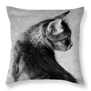 The Purrfect Glance Back Throw Pillow