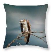 The Raptor - Osprey Throw Pillow