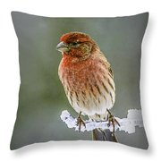 The Red Finch Throw Pillow