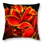 The Reds Of Winter Throw Pillow