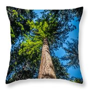 the Redwoods of Muir Woods Throw Pillow