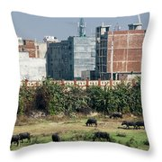 The Road To Delhi Throw Pillow