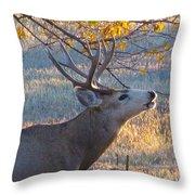 The Rut  Throw Pillow