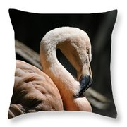 The Sacred Old Flamingoes Throw Pillow