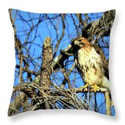 The Search Red Tail Hawk Art Throw Pillow