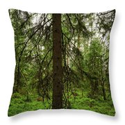 The Shadow Of The Spruce Throw Pillow