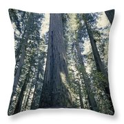 The Shenandoah National Forest Throw Pillow