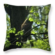 The Shy Owl Throw Pillow