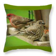 Two Finch's Throw Pillow