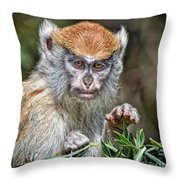 The Stare A Baby Patas Monkey  Throw Pillow