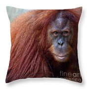 The Staring Contest Throw Pillow