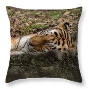 The Tiger's Rock  Throw Pillow