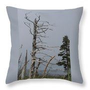 The Trees Of Grand-manan Throw Pillow