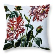 The Variegated Rose Of England Throw Pillow