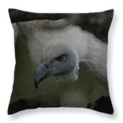 The Vulture Dry Brushed Throw Pillow
