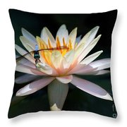 The Water Lily And The Dragonfly Throw Pillow by Sabrina L Ryan