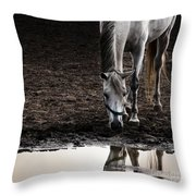 The Water Reflection Throw Pillow