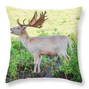 The White Stag 2 Throw Pillow