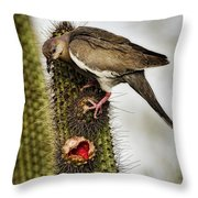 The White Winged Dove  Throw Pillow