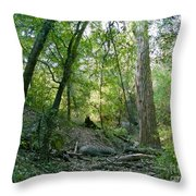 The Wild Medina Throw Pillow