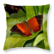 The Wizard Butterfly Throw Pillow
