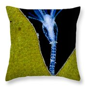 Thecate Hydrozoan Clytia Sp., Lm Throw Pillow