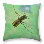 Thin Waisted Wasp On Door Glass     October  Indiana Throw Pillow