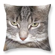 Thinking Holly The Cat Throw Pillow