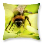 Thirsty Bumble Bee. Throw Pillow