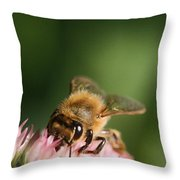 Thirsty For Nectar Throw Pillow