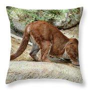 Thirsty Puma  Throw Pillow