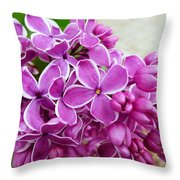 This Lilac Has Flowers With A White Edging. 4  Throw Pillow