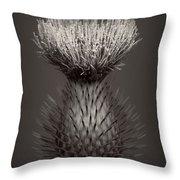 Thistle 3 Throw Pillow
