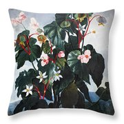 Thornton: Begonia Throw Pillow