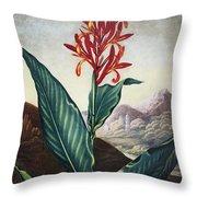 Thornton: Indian Reed Throw Pillow