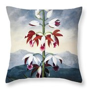 Thornton: Limodoron Throw Pillow