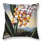 Thornton: Shell Ginger Throw Pillow